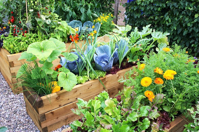 Sprout Your Own Vegetable Patch