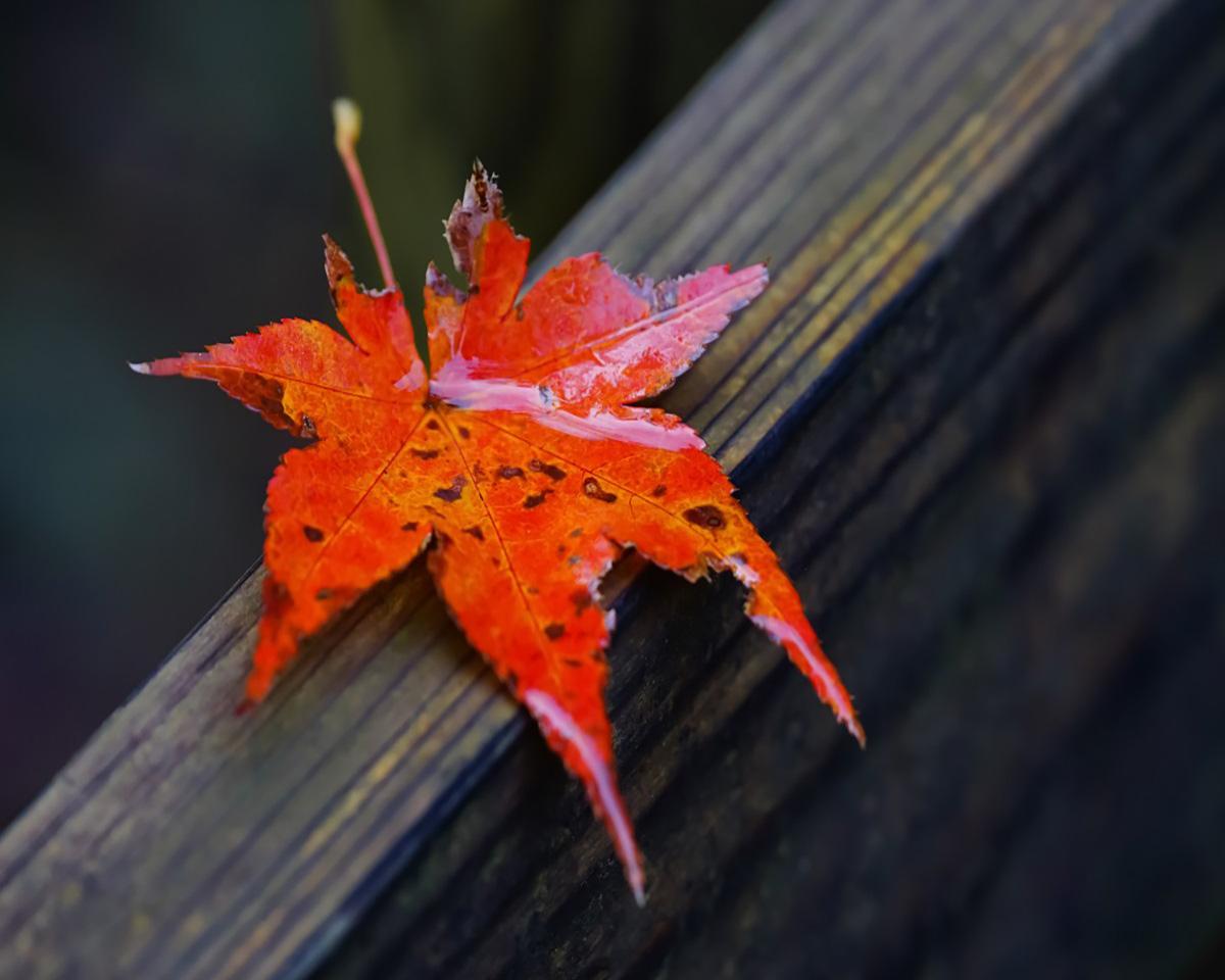 Checklist to Prepare For Autumn