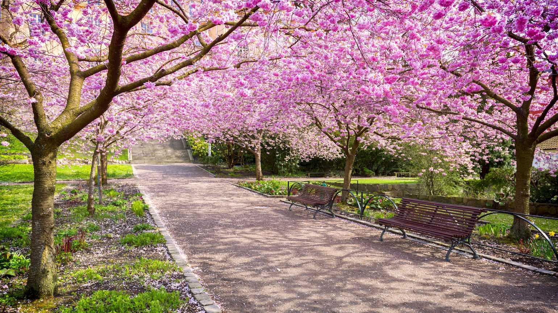 Why Spring Brings Hope